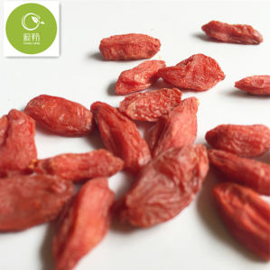 Manufacture Supply Organic Goji Berry / Wolfberry pictures & photos