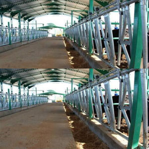 Manufacturing Farm Equipment Cattle Headlock pictures & photos