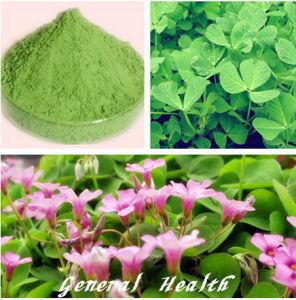 Natural Spray Dried Alfalfa Powder (Fruit and Vegetable Powder)