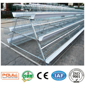 Layer Chicken Cages System Equipment pictures & photos