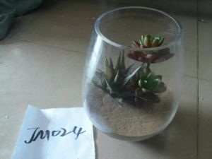 Artificial Plants and Flowers of Mini Plant Succulent Gu-SD0302 pictures & photos