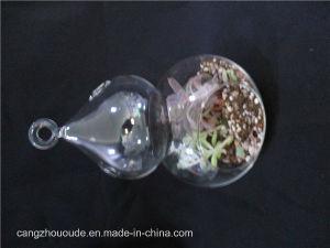 Gourd Transparent Plant Hanging Decorative Glass Vase pictures & photos