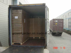 4mm Growell Walk -in Polycarbonate Greenhouses (6′ X 8′ SP608) pictures & photos