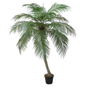 Polyester Artificial Plants of Phoenix Palm pictures & photos