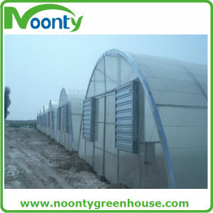 Economical Single Tunnel Plastic Film Agriculture Greenhouse pictures & photos