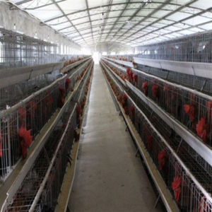 Steel Structuture Building--Poultry Shed (PS-003) pictures & photos