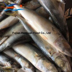 New Frozen Fish Pacific Mackerel pictures & photos