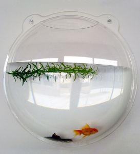 China wall mounted acrylic fish bowl 7 5l fish tank for Acrylic fish bowl