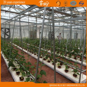 Plastic Film Commercial Vegetable Greenhouse pictures & photos