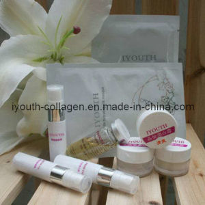 GMP, Top 100% Natural Golden Milkfish Collagen Travel Gift Box pictures & photos