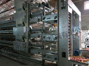 Hot Sale Galvanized Chicken Cage Certificate ISO9001 pictures & photos