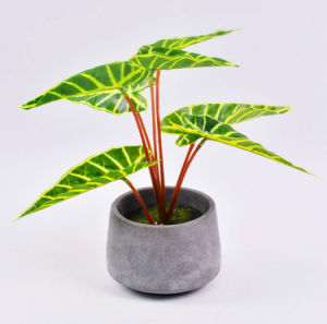 Beautiful Artificial Plants Leaves in Cement Pot pictures & photos