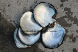 Black Mother of Pearl Shell Raw Material for Decoration Material pictures & photos