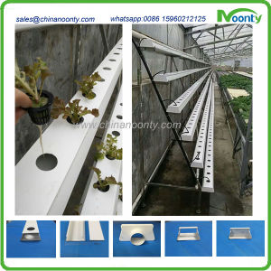Nft Hydroponics System for Lettuce, Cabbage, Herbs, etc pictures & photos