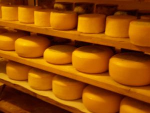 Cheddar Cheese Production Line pictures & photos