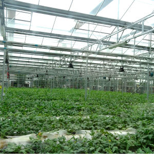 Newest Multi-Span Glass Greenhouse for Sale pictures & photos