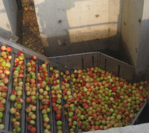 Complete Turnkey Fresh Juice Production Line pictures & photos