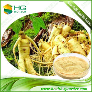 UV80% Ginsenoside 40-55%HPLC Panax Ginseng Extract