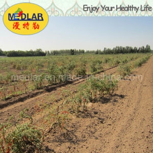 Medlar Lbp Dried Ningxia Red Organic Dried Wolfberry