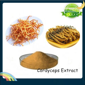 Cordyceps Extract, Cordyceps Sinensis Extract Polysaccharides 30% pictures & photos