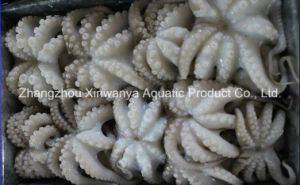 Hot Sale Frozen Baby Octopus Whole Cleaned