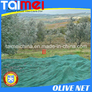 Anti Hail Nets Green Net for Olive Harvesting pictures & photos