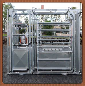 Hot Dipped Galvanized Ambassador Cow Custom Crush pictures & photos