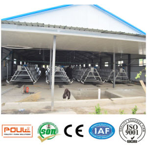 Chicken Cages System Equipment or Poultry Farm Equipment pictures & photos
