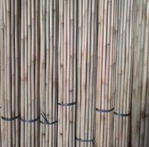 Bamboo Cane 305cm pictures & photos