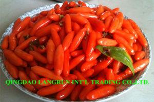 450grains/50g Dried Goji Berries/Organic Goji Berries/Chinese Wolfberry