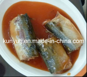 Canned Sardines in Oil pictures & photos