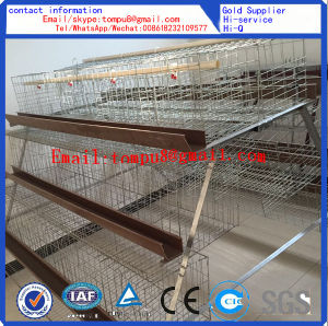 Chicken Cage|Farm Farming Chicken Cage| pictures & photos