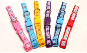 Pet Product Dog Cat Puppy Colorful Collar (C012) pictures & photos
