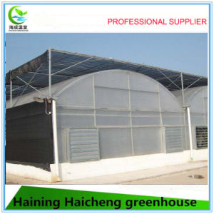 Plastic Film Greenhouse for Flower Growing pictures & photos