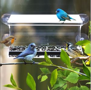 4 Heavy Duty Suction Cups Acrylic Window Bird Feeder pictures & photos