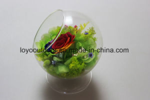 Valentines Gift Preserved Fresh Flower pictures & photos