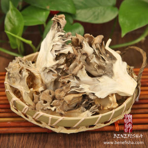Dried Maitake Mushroom (Grifola Frondosa) pictures & photos
