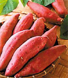 Sweet Potato (SP001)