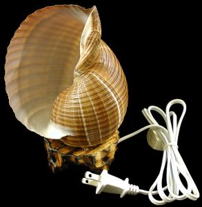 Shell Desk Lamp