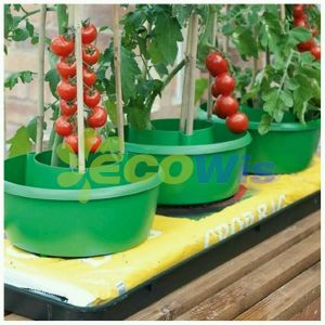 Pots Tomato Plants Ring China Manufacturer pictures & photos