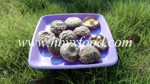 Quality Mushroom Fresh Smooth Shiitake Mushroom for Sale pictures & photos