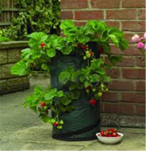 Heavy Duty 200GSM Garden Growing Bag with Handle pictures & photos