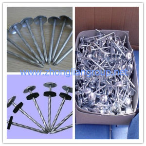 Quality Umbrella Head Roofing Nails (ZL-RN) pictures & photos