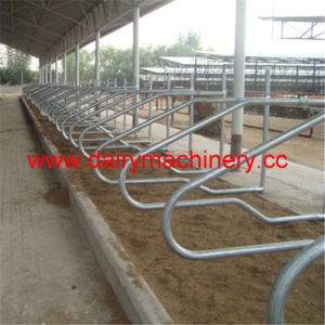 Hot Galvanized Steel Pipe Cow Free Stall pictures & photos