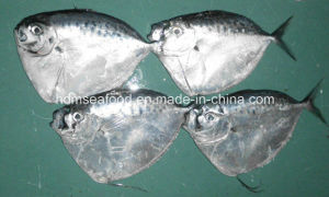100-200g Frozen Whole Round Moonfish pictures & photos