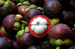 (Mangosteen Extract) Natural Alpha Mangostin pictures & photos