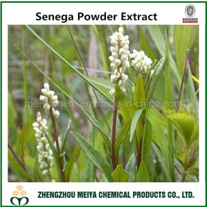 Medicinal Ingredient High Quality Senega Root Powder Extract 5: 1, 10: 1 pictures & photos