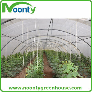 Cheap Single Tunnel Plastic Greenhouse pictures & photos
