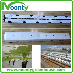 PP Hydroponics Growing Trough System with Coco Peat for Strawberry, Tomato, Eggplant pictures & photos