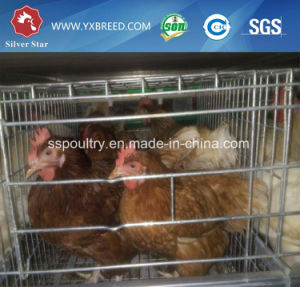 Highest Top Quality 4 Floors Chicken Layer Cages for Sale pictures & photos